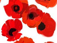 Poppies appeal