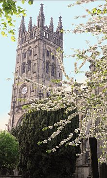 St Marys Tower with blossom